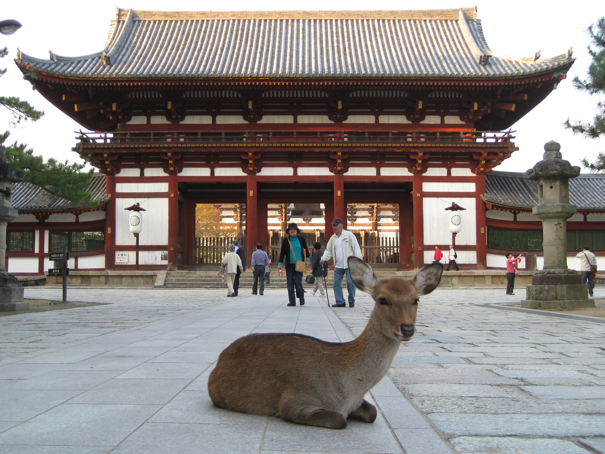 Nara The Ancient Beginnings Of Japan